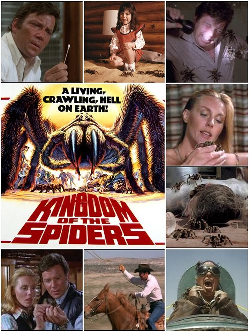 Kingdon spiders